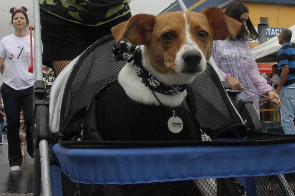 Cachorra enfrenta dias difíceis desde que atingida por motoqueiro. (foto: Eisner Soares)